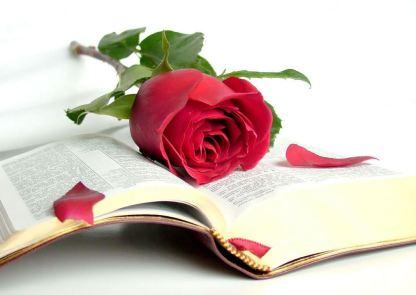 linda-rosa-roja-enmedio-de-un-viejo-libro--red-rose-and-book